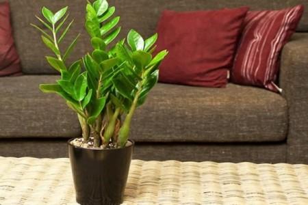 Trồng cây trong nhà giúp bạn chăm sóc sức khỏe phổi của mình